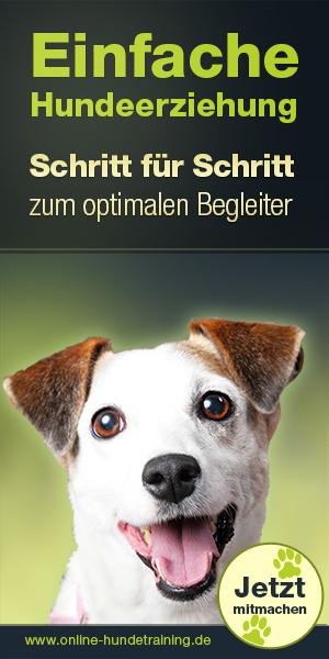 Online Hundetraining – Einfache Hundeerziehung